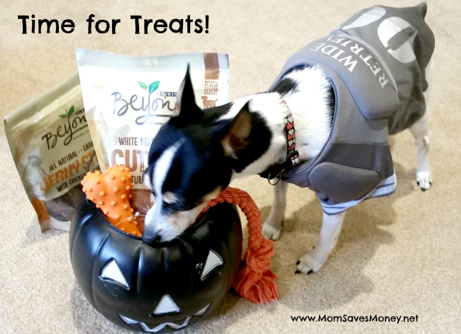 boo basket for dogs