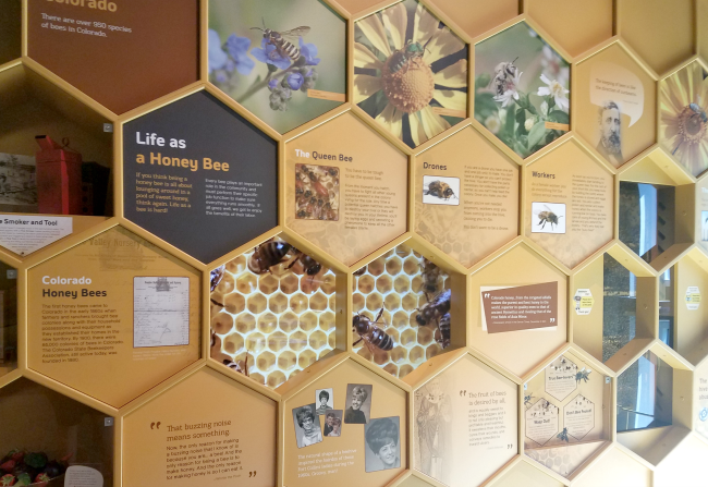 fort collins museum of discovery bees